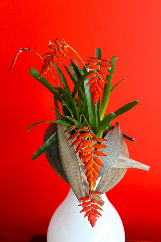 composition florale en pot galerie des créations florales