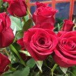Bouquet de roses achat fleurs en ligne saint-valentin