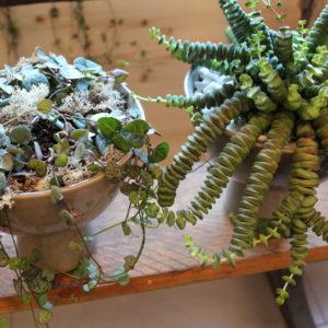 Chloé Savary, plantes vertes, plantes grasses