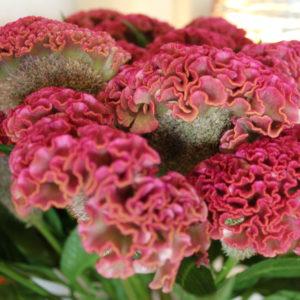 Chloé Savary, fleurs d'automne, bouquets simples